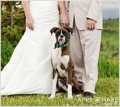 I'm going to do this with my boxer when I get married