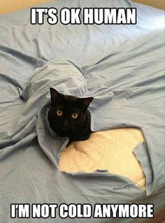And That's Everything You Need To Know About Cats - 25 Pics