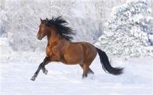 """Алмазная мозаика """"Красивый конь"""""""