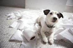 Cómo entrenar a tu cachorro para ir al baño
