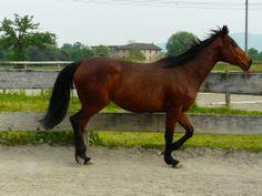 AzColleSole_betulla Art Illustrations, Illustration Art, Italy, Horses, Animals, Italia, Animales, Animaux, Horse