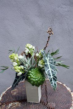 buddhashandsucculent2.jpg (600×900)