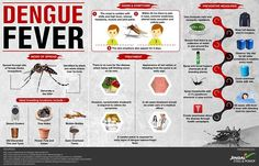 Everything you need to know about Dengue. Awareness about dengue fever, its spread, causes, symptoms, treatment and possible prevention! Be safe and stay happy.