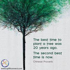 Plant a tree :)