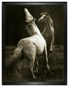 Hyden Rustic Lodge Modern Playing Pair Horse Photo Wall Art - Large Framed  prints and posters