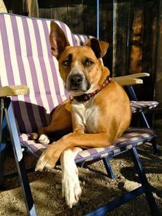 Follow DOGTV for awesome treats for humans who love their dogs! dogtv.com facebook.com/tv4dogs twitter.com/dogtv blog.dogtv.com