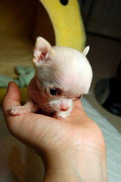 She is so tiny