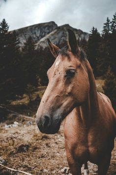 5 things you need to teach your horse before you ride 5 Things You Must Teach Your Horse Before Riding – The Rider's Reins - Art Of Equitation Cute Horses, Pretty Horses, Horse Love, Beautiful Horses, Animals Beautiful, Majestic Animals, Horse Girl, Animals And Pets, Baby Animals
