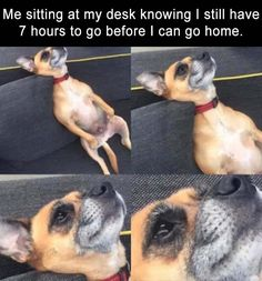Afternoon Funny Picture Dump 39 Pics