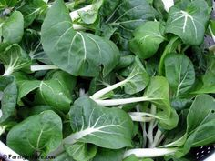 Easy How To: Grow Asian Greens Like Bok Choy, Pak Choy, Tatsoi, and Mizuna by Direct Seeding in the Garden