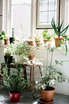 Potted plants in the window - I've rounded up some of my favorite interiors with gorgeous natural light.