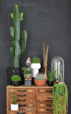 Kakteen gehen: Kaktus (Vorsicht: Stachel!) schnappen und ihn mit ein paar hübschen anderen Sukkulenten kombinieren und arrangieren. (Suchanfragen für Kakteen Arrangements +235 %)