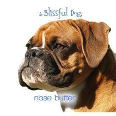 Blissful Dog Blissful Existence