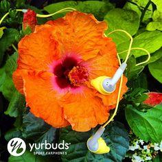 Follow us on Instagram - @yurbuds!