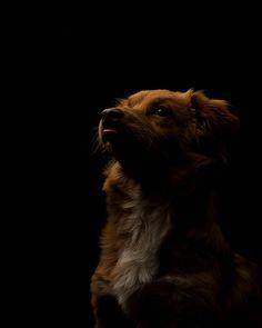 doggy Hermesmes lowkey. 46/365 by carlos engelkamp on 500px