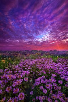 Peace That Surpasses All Understanding - Wisconsin Horizons by Phil Koch Nature Aesthetic, Flower Aesthetic, Lavender Aesthetic, Landscape Pictures, Nature Pictures, Art Pictures, Aesthetic Backgrounds, Aesthetic Wallpapers, Landscape Photography