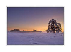 Baum Kornbühl Nebel Reif Schnee Schwäbische Alb Sonnenuntergang Winter