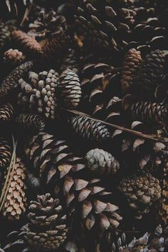 Image about christmas in fall is coming by thank u for following me ♡