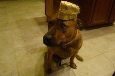 dog with cake on head