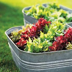 Galvanized tubs make great containers for veggies - drill holes in the base