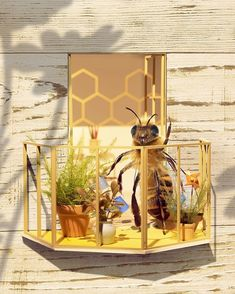 The World's First Bee Influencer Is Trying To Raise Funds To Save Her Species Bee Photo, Bee Friendly, Real Queens, Bee Art, Water Me, Save The Bees, Little Plants, Bees Knees, Flower Seeds