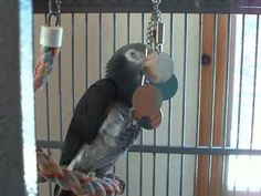 Parrot Enrichment Blog   Helping people enrich the environment of the parrots they live with.