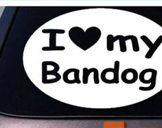 Check out our Bandogs selection for the very best in unique or custom, handmade pieces from our shops. American Bandogge Mastiff, Vintage Marketplace, Pitbull, Fur Babies, Logos, Baby, Handmade, Hand Made, Pit Bull