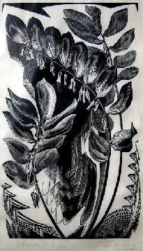 Gertrude Hermes (British, 1901-1983).  Solomon's Seal. 1930. (wood engraving)