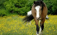 Image result for horses meadow