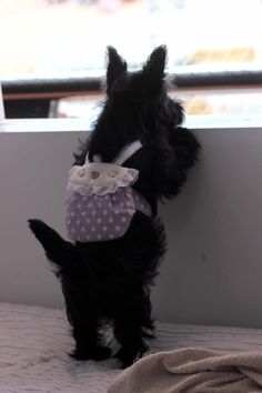 """Scottish terrier. ... Hope you're doing well..From your friends at phoenix dog in home dog training""""k9katelynn"""" see more about Scottsdale dog training at k9katelynn.com! Pinterest with over 22,200 followers! Google plus with over 535,000 views! You tube with over 600 videos and 60,000 views!! LinkedIn over 12,300 associates! Proudly Serving the valley for 12 plus years! now on instant gram! K9katelynn"""