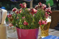 Blumen gießen! Bier genießen!