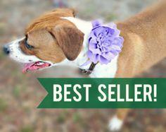 Dog collar flower | Etsy
