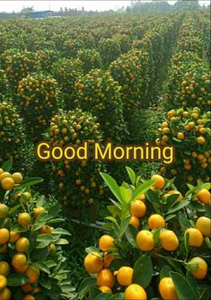 Good morning Have a good day Good Morning Friends Images, Good Morning Beautiful Pictures, Good Morning Images Flowers, Good Morning Thursday, Good Morning Images Hd, Morning Love Quotes, Morning Greetings Quotes, Good Morning World, Good Morning Picture
