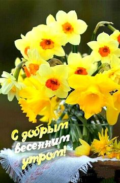 Доброе Утро, Цветы, Растения