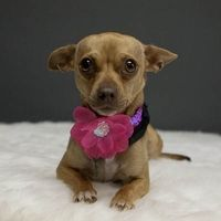 . . . SIRIously sweet.   This is Siri, a sweet girl at MaxFund, a no-kill shelter in Denver.  6.8.12