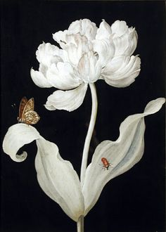 Peony with Bug and Butterfly /Barbara Regina Dietzsch