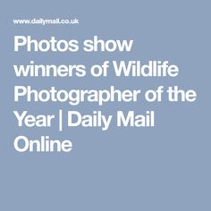 Photos show winners of Wildlife Photographer of the Year | Daily Mail Online