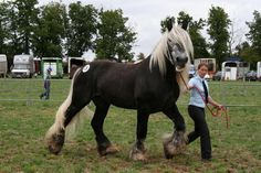 Draft Horse Village :: View topic - French horsebreeds