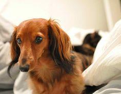 One Pretty Dog for a hotdog