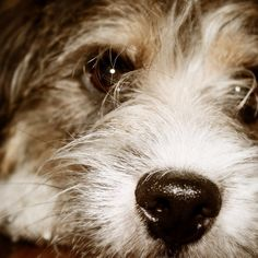 heididahlsveen:  #atsjoo nine months #dog #hund