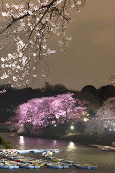 301:「夜桜」@千鳥ヶ淵