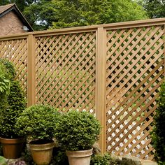 Id love lattice fencing for back and side of property.