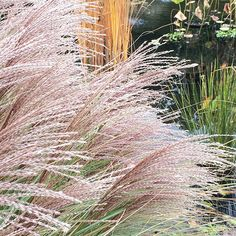 Wave Hill grasses | color study ph. by Abigail Doan | November 2015