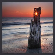 Sunsets and driftwood