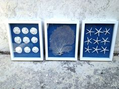 Set of 3 framed sand dollar,seafan and starfish in white shadow box on blue fabric. Cottage beach chic coastal home