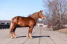 Бронза (Балтика - Хоккей) л. Анода. Международная выставка породистых лошадей в…