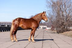 Byelorussian Harness Horse mare, Bronza. This is a breed developed in Russia.