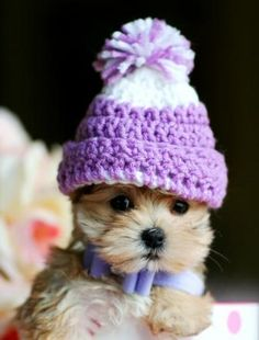 ♥♥♥ Teacup Morkie! ♥♥♥ Bring This Perfect Baby Home Today! Call 954-353-7864 www.TeacupPuppiesStore.com