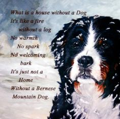 Bernese Mountain DOG NEW Hardboard Tile DOG Lover Gift NO 3 Sandra Coen Artist   eBay