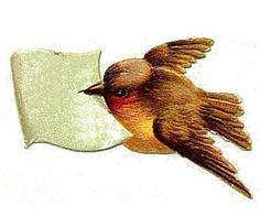 Bird with message.